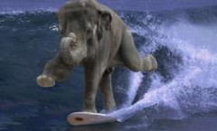 surfing_elephant