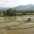 Laos-Luang-Prabang-cascades-15
