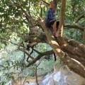 Laos-Luang-Prabang-cascades-35