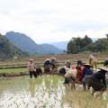 Laos-Muong-Ngoi-Trek-10