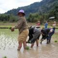 Laos-Muong-Ngoi-Trek-11