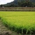 Laos-Muong-Ngoi-Trek-14