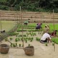 Laos-Muong-Ngoi-Trek-16