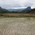 Laos-Muong-Ngoi-Trek-18