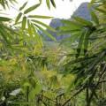 Laos-Muong-Ngoi-Trek-34