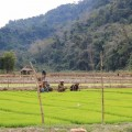 Laos-Muong-Ngoi-Trek-9