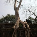 Angkor-Siem-Reap-Cambodge-28