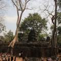Angkor-Siem-Reap-Cambodge-29