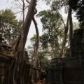 Angkor-Siem-Reap-Cambodge-30