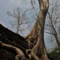 Angkor-Siem-Reap-Cambodge-31