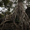 Angkor-Siem-Reap-Cambodge-34