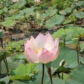 Angkor-Siem-Reap-Cambodge-76
