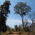 Plateau-des-bolovens-Laos-7
