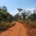 Plateau-des-bolovens-Laos-8