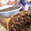 araignees-grillees-skone-cambodge-7