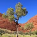 Kata-Tjuta-Olgas-northern-territory-australia-11
