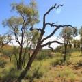 Kata-Tjuta-Olgas-northern-territory-australia-17