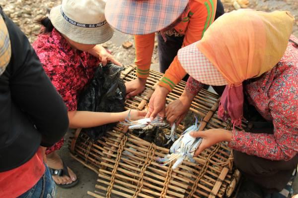 kep crabes cambodge 13. Black Bedroom Furniture Sets. Home Design Ideas