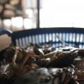 Kep-Crabes-Cambodge-2