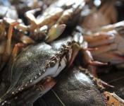 Kep-Crabes-Cambodge-3