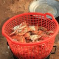 Kep-Crabes-Cambodge-7