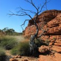 Kings-Canyon-Red-Center-Australia-10
