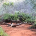 alice-springs-australie-13