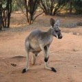alice-springs-australie-25