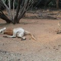 alice-springs-australie-27