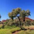 panorama-Kata-Tjuta-Olgas-northern-territory-australia-5