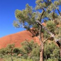 uluru_ayers-rock-red-center-australia-8