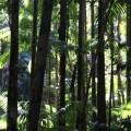 fraser-island-australie-8