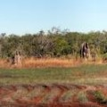 litchfield-national-parc-darwin-australie-pano-1