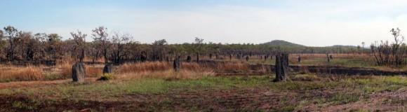 termitières de termites magnétiques au parc national de Litchfield, en Australie