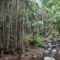 skywalk-tamborine-rainforest-australie-12