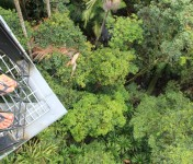 skywalk-tamborine-rainforest-australie-16