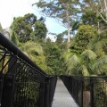 skywalk-tamborine-rainforest-australie-5