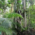 skywalk-tamborine-rainforest-australie-8