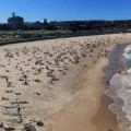sydney-plages-panorama-1