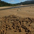 townsville-magnetic-island-australie-27