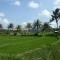 Tirtagangga-Besakih-Mont-Batur-Bali-28