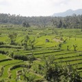 Tirtagangga-Besakih-Mont-Batur-Bali-3