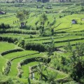 Tirtagangga-Besakih-Mont-Batur-Bali-4
