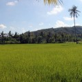 plus-belles-plages-de-kuta-lombok-indonesie-panorama-35