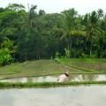 ubud-bali-indonésie-1