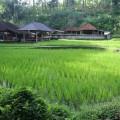 ubud-bali-indonésie-11
