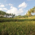 ubud-bali-indonésie-13