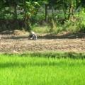ubud-bali-indonésie-3