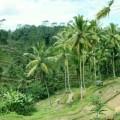 ubud-bali-indonésie-panorama-4