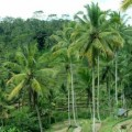 ubud-bali-indonésie-panorama-5
